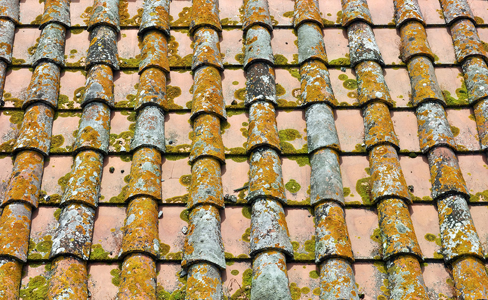 moss roof tiles need cleaning spain